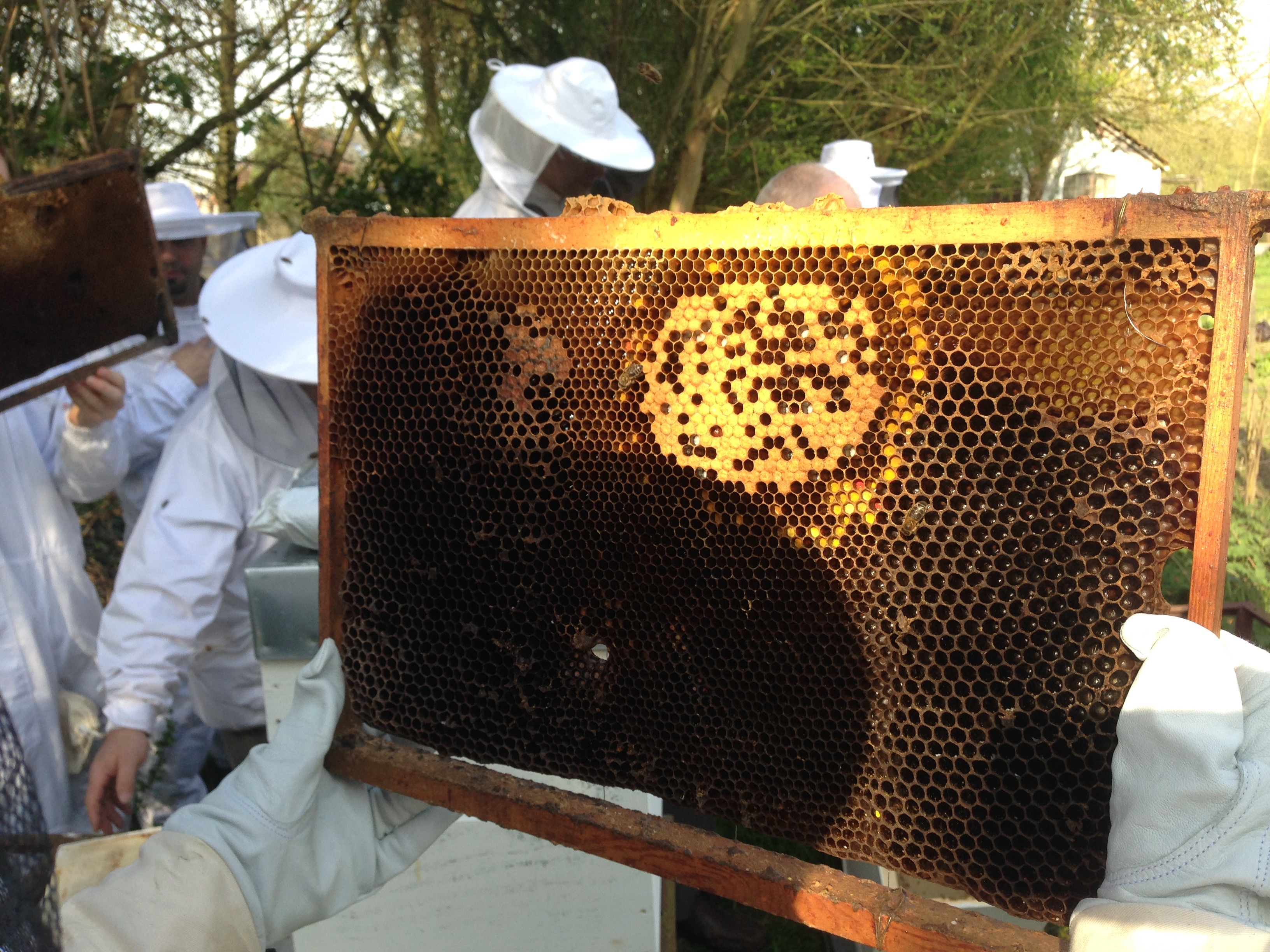 formation apiculture naturelle